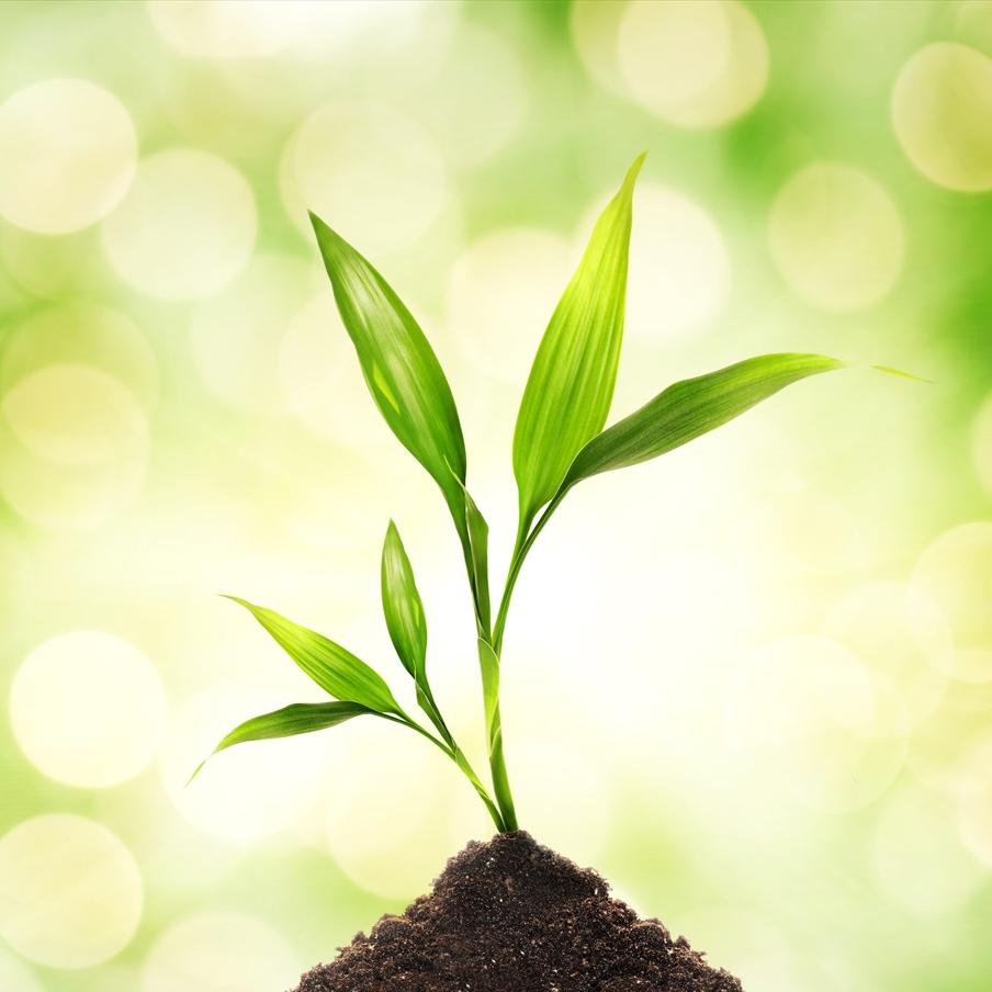 3 Tips About Using Urea Fertilizer