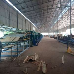 Acacia Veneer Drying Machine for Vietnam