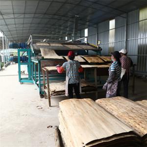 Birch Tree Veneer Dryer Technology