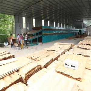Eucalyptus Wood Veneer Drying Machine for Sale