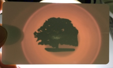 CT (OLD) Oak Tree card
